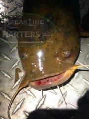 Jaime Hughes, captain of BreakLine Charters, provided these photos of unhealthy catfish.