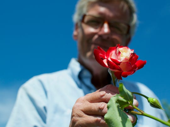 Paul Mitchell, master gardener and rosarian at Maplewood Park, holds up a Double Delight, one of his favorite rose variations.