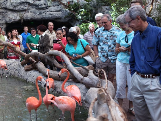 Visitors to the Texas State Aquarium check out flamingos