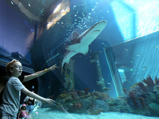 Fun Places To Go With Kids In Corpus Christi