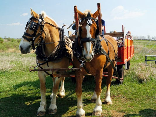 The Belgian horses and hay wagon, provided by the Charles Lindsay family of McDowell Road in Greencastle, have been a popular attraction at the Joy El Jubilee for many years. Photo courtesy Joy El