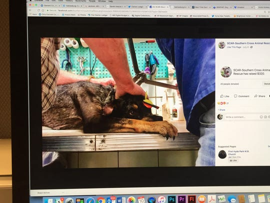 Vets remove an arrow from a dog's head in this photo