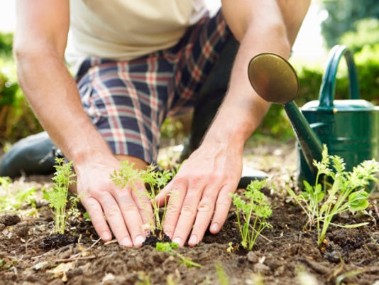 Thinkstock Garden Gardening yard vegetables.jpg