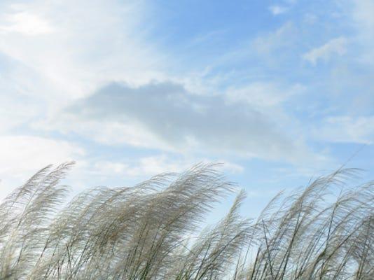 High Wind1