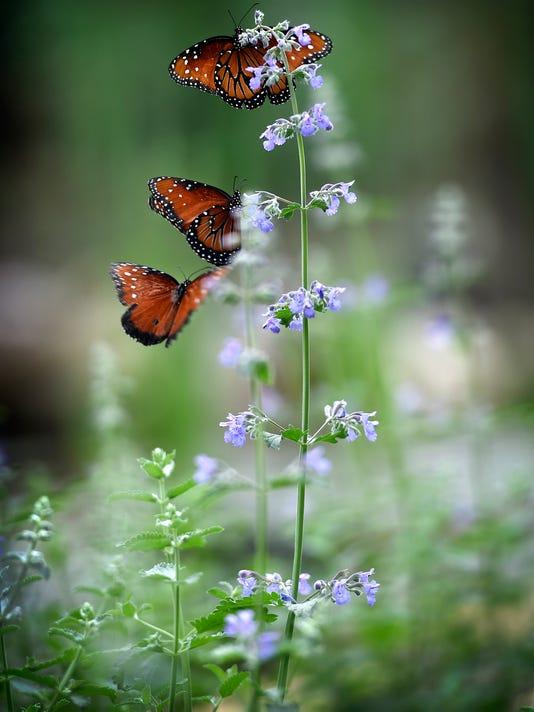 ldn-mkd-052716-butterfly-