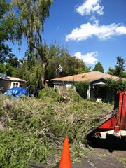 Professional tree removal companies have the necessary equipment for cutting down trees and hauling away the debris.