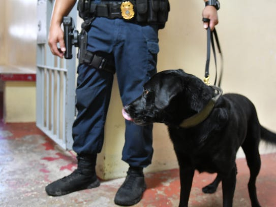 A Guam Customs K-9 Department officer conducts a sweep