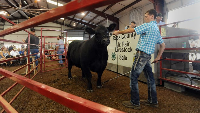 Curtis Clary shows his steer during the sale Saturday at the Ross County Fair. Clary donated all the proceeds of his sale to the endowment fund for 4-H scholarships in honor of Bob Whitten.