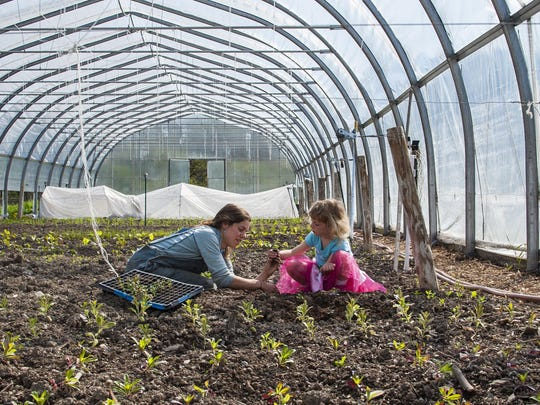 Bekah Gordon, left, Samantha Dorman, 5, transplant seedlings at Bread and Butter Farm in Shelburne on Friday, May 20, 2016. Bread and Butter Farm encompasses several small enterprises on the property, which extends into South Burlington.