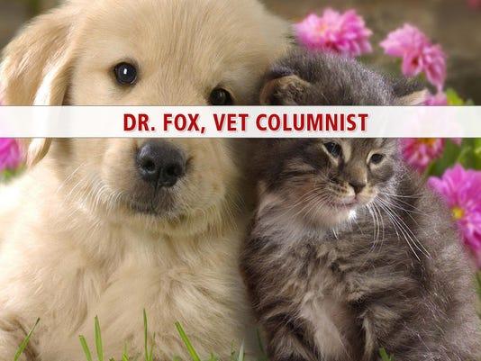 webkey_dr_fox
