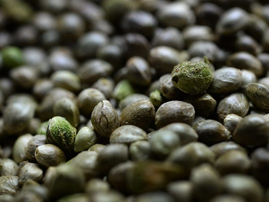 Hemp farmers waiting for delivery of highly regulated seeds