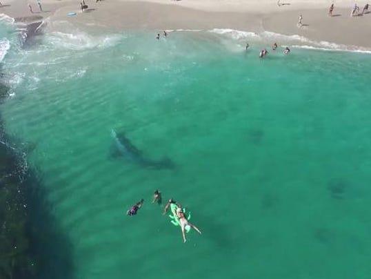 636379254392174848-whale.jpg