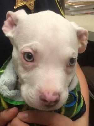 Someone left an eight-week-old puppy in a dumpster on Thursday, August 11, 2016 in Lansing.