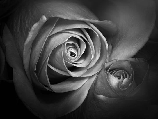 The smoothness of a flower is enhanced through black