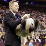 A handler carries Charlie, a Skye terrier, to the judging table at the Westminster Kennel Club dog show in New York last year.