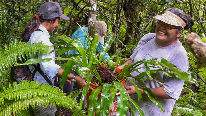 Pa'a Taotao Tano' member Zina Ruiz, right, smiles after she and others were successful in harvesting a plant from within the jungles of the Naval Computer and Telecommunications Station in Finegayan, Dededo on Wednesday, Oct. 26.