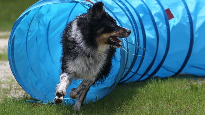 A dedication ceremony of the Richard Dumire Dog Park, also known as Doggy Heaven, at The Shell Factory and Nature park will be held Dec. 20 at 2 p.m.