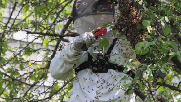 Bee hive rescue