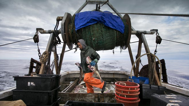 In this April 23 photo, Elijah Voge-Meyers carries cod caught in the nets of a trawler off the coast of New Hampshire. Fishermen in the northeastern U.S. are struggling with warming waters that have transformed some of the country's oldest and most historic commercial fisheries.