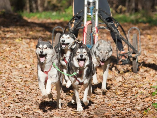 Dogs will pull their owners over dry land this weekend at Willow Springs Garden.
