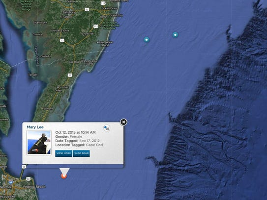 A screenshot of OCEARCH's shark tracker shows great