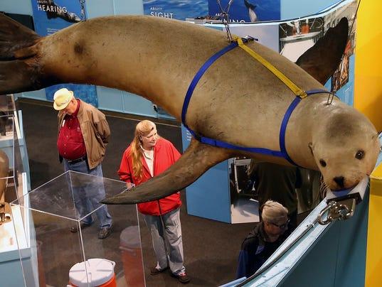 Keyport-Marine-Mammal-Exhibit-01.JPG