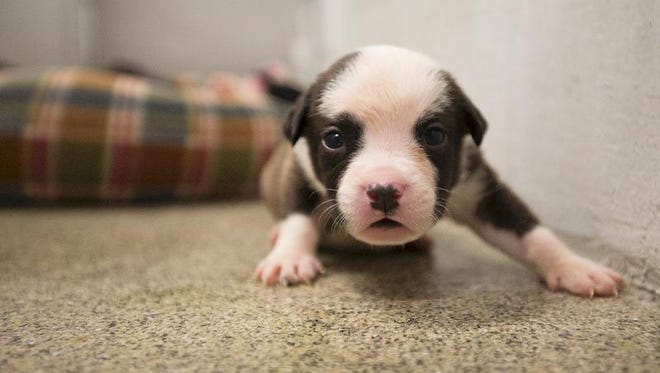 A curious puppy was feeling much better Monday after being kept in a hot U-Haul on Sunday.