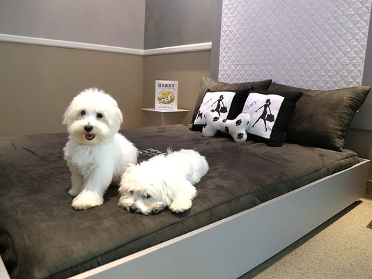 Pampered pets enjoy the suite life: 130-room resort opens for cats, dogs