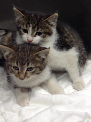 Two male kittens