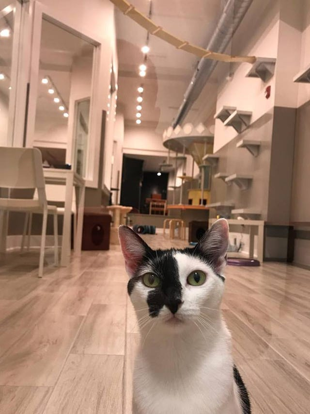Catsbury Park, first cat cafe at the Jersey Shore, opens in