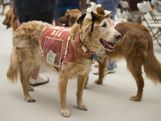 Free Vaccinations For Dogs In Tucson