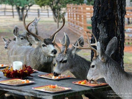 catching on deer thanksgivingdavid