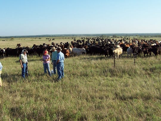 A ranch near Henrietta represents high density management