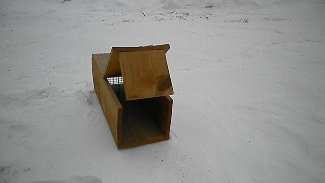 Lakeshore Beagle Club is looking for rabbits for their enclosure. Building a homemade box trap, such as the one shown in this photo, is an easy and inexpensive way for youngsters to catch a few rabbits when snow is covering the ground.