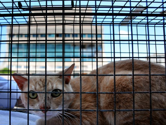 Morris the Glass Bank Cat 12