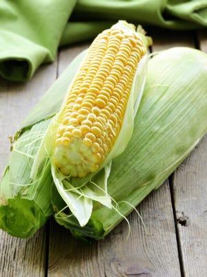fresh organic corn on the wooden table