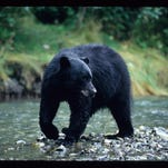 A bear attacked a woman but then her dog chased it away.