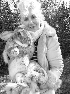 Annette Edwards and Darius. Darius is currently world's biggest rabbit and father of Simon, the 3-foot, 10-month old rabbit that died on a United Airlines flight from London and Chicago.