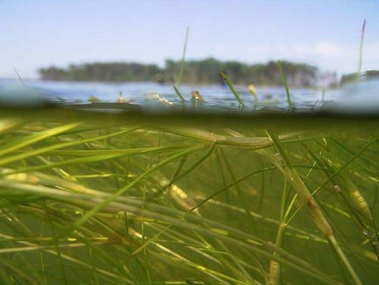 Bay-Grass.jpg