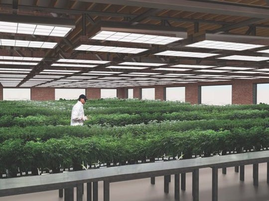 An artist's rendering of the interior of the planned medical marijuana facility, created by architectural firm Murphy & Dittenhafer.