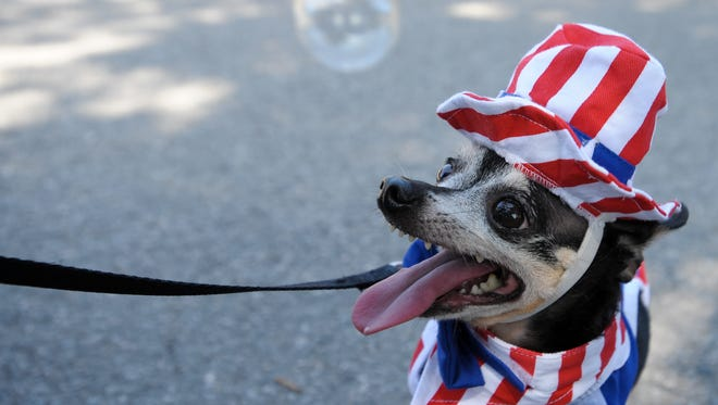 Dogs are fine with Fourth of July parades, but not with fireworks.