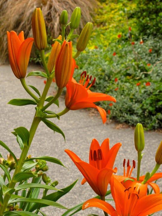 Gardening-Curbside_Atzl.jpg