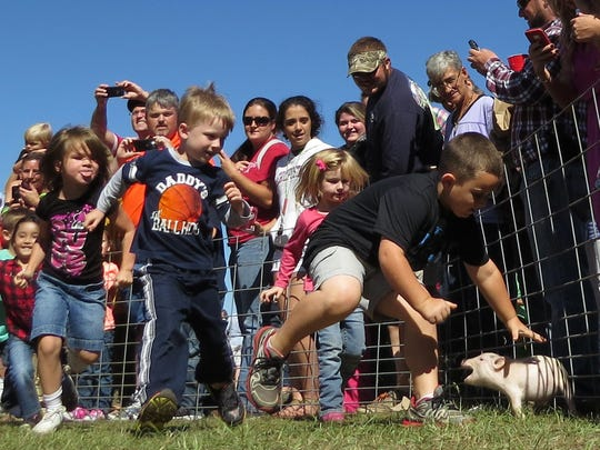 Children participate in a pig chase at a previous Jay Peanut Festival.  Venture to Jay on Saturday and Sunday for this year's festival.