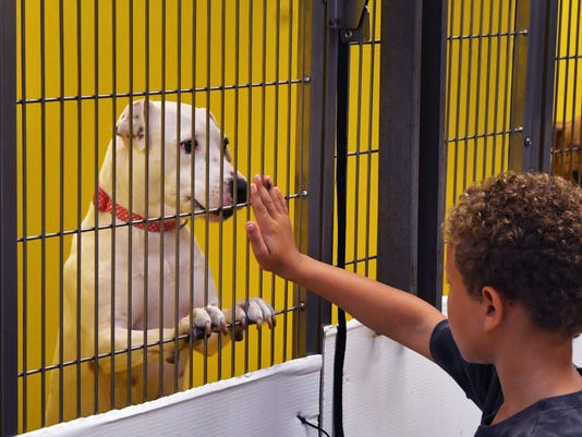 SPCA  in Titusville having an adoption special