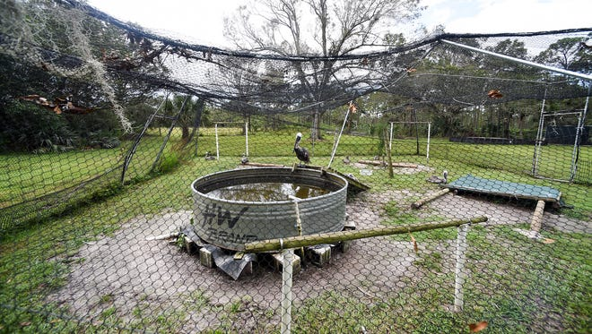 """A seriously damaged pelican enclosure is seen Thursday, Sept. 21, 2017, at the Treasure Coast Wildlife Center in Palm City. The cleanup and repair process is still underway at the center in the aftermath of Hurricane Irma. """"We need these cages rather desperately,"""" said Executive Director Dan Martinelli. The center has 200 to 300 creatures under its care at any given moment and receives anywhere from 1,500 to 2,000 """"patients"""" each year, Martinelli said. One of the greatest and most significant needs the center faces is backup power after the electricity goes out. Nearly $15,000 worth of food for the animals requires refrigeration and can spoil quickly. """"These items aren't sitting on the shelf at Publix,"""" Martinelli said. """"They can be hard to come by."""" To make a donation to help fund rebuilding, go to www.gofundme.com/tcwc-needs-your-help."""