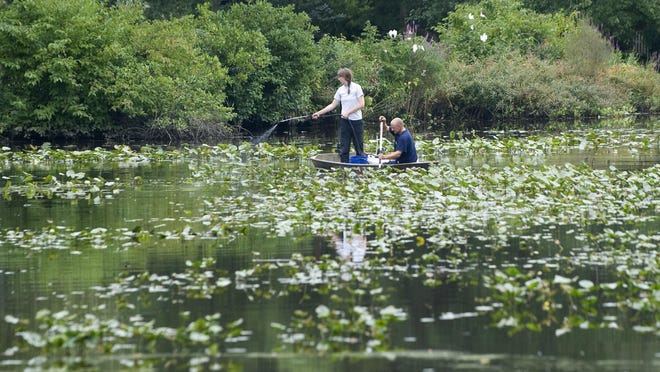 Spatterdocks choking Kirkwood Lake in Voorhees have been sprayed with an herbicide to kill them every year pending dredging of the contaminated lake, part of a Superfund site that was once a former paint factory in neighboring Gibbsboro.