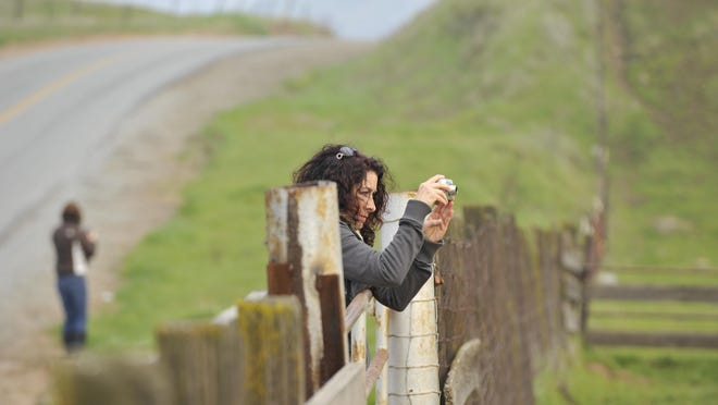 Judy Dill of Fresno leans over a fence along Yokohl Valley Road to photograph a landscape in 2011. Photographers from two groups gathered to explore the area and take pictures to share.