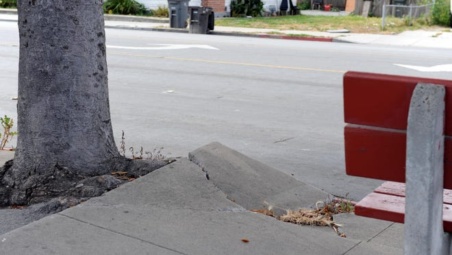 Sidewalks and tree roots make way for each other along E. Alisal St. in Salinas.