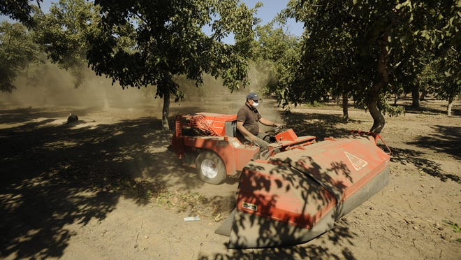 In this archive photo, Cuevas sweeps the nuts, leaves and sticks into a row for the harvester to collect during the 2008 harvest season. County Supervisors will consider adopting amendments to a nut theft ordinance.