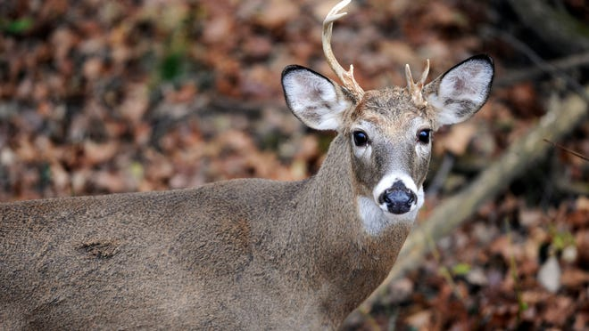 Managing Ohio's deer herd offers state officials a complex problem.